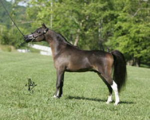 SIRE 2010 NATIONAL SUPREME GRAND CHAMPION