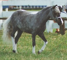 MISS REMARKABLE 1999 NATIONAL SUPREME CHAMPION